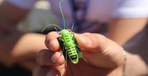 Alternatif Enerjiyi Robot Cırcır Böceğiyle Anlatıyorlar