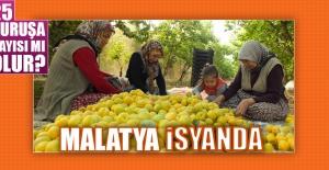 Malatya'da Kayısı Üreticileri İsyan Ediyor