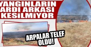 25 Dönüm Arpa Ekili Arazi Yandı!