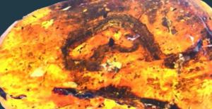 99 Milyon Yıllık Yılan Fosili Bulundu