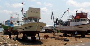 Balıkçılar Palamuttan Umutlu