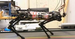 Robot Çita Kör Olmasına Rağmen Tüm Engelleri Aşıyor
