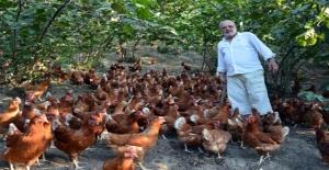 60 Tavukla Başladı, Köy Tavukçuluğunu Canlandırdı