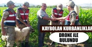 Kaybolan Kurbanlıklar Drone İle Bulundu