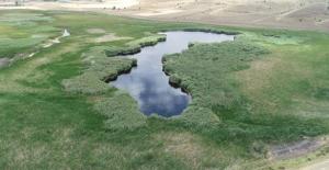 Kaz Gölü Yok Olma Tehlikesiyle Karşı Karşıya