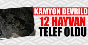 Elazığ'a Gelen Kamyon Tunceli'de Devrildi 12 Hayvan Telef Oldu!