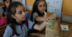 """Kedi """"Tombi"""" yaz tatilinin ardından okula döndü"""