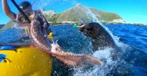 Yeni Zelanda'da fok balığından beklenmedik tepki