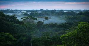 Amazon'lara Otoyol Yapacak Olan Yeni Brezilya Başkanı, Bilim İnsanlarını Dehşete Düşürdü