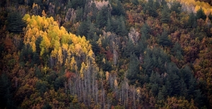 Eşsiz Doğasıyla Öne Çıkan Gümüşhane'de Sonbahar Renkleri