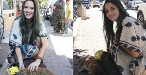 Gaziantep sokaklarının kedileri İtalyan Lucato'ya emanet