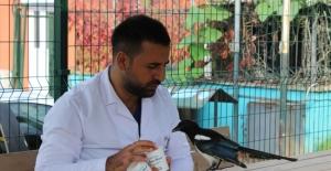 Saksağan kendisini tedavi eden veterinerden ayrılamıyor
