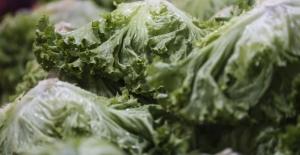 Yapraklı Sebzeler Sarı Nokta Hastalığını Önleyebilir