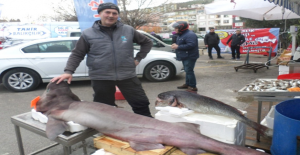 Marmara Denizi'nde Dev Köpek Balığı Yakalandı