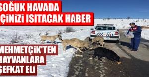 Mehmetçik'ten Hayvanlara Şefkat Eli