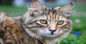 Bilime Göre Kedilerin Asosyal Olduğunu Düşüyorsanız Sorun Muhtemelen Kedide Değil, Sizde
