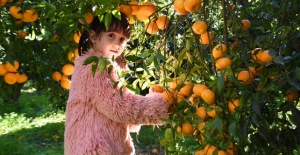 En çok ihraç edilen turunçgil mandalina