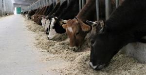 Hayvancılıkta yüksek teknolojiye geçiş hazırlığı