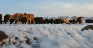 Hayvanları için kışın zorluklarına göğüs geriyorlar
