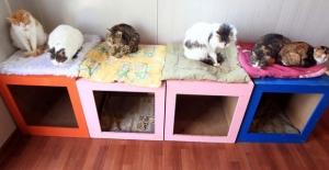 """Samsun'da bin kedinin yaşadığı """"Kedi Kasabası"""""""