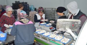Destek Alarak İş Yerini Büyüten Girişimci, Türkiye'nin Dört Bir Yanına Mantar Satıyor