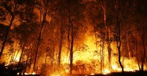 İklim Değişikliğine Karşı Devasa Mücadele: 1,2 Trilyon Ağaç Dikilmeli