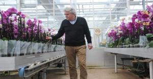 Yalova'da Kurulan Orkide Üretim Merkeziyle Yıllık 15 Milyon Euro Ülkede Kaldı