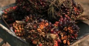 Malezya ile Avrupa Birliği arasında palm yağı krizi