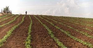 Üreticiye tarımsal destek sürüyor