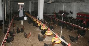 Devlet desteğiyle kurduğu çiftlikte organik yumurta üretiyor
