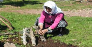 Köyde Katran Üreten Tek Kişi! Kilosunu 200 Liradan Satıyor