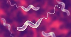 Mutfaklarda ve Gıdalarda Bulunan 10 Tehlikeli Bakteri Türü