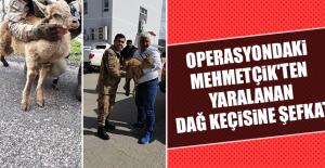 Operasyondaki Mehmetçik'ten Yaralanan Dağ Keçisine Şefkat