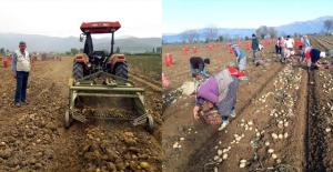 Patates Üreticileri: Fiyat 2,5 Liranın Altına Düşerse Zarar Ederiz
