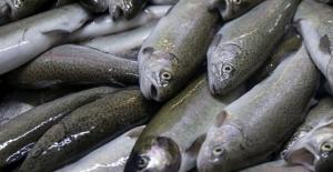 70 ülke Muğla'nın balığını yiyor