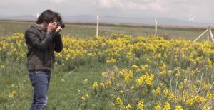 Eber Sarısını Koparmanın Cezası 60 Bin Lira