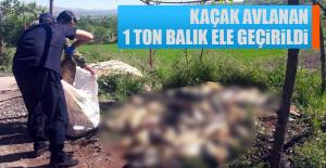 Kaçak Avlanan 1 Ton Balık Ele Geçirildi