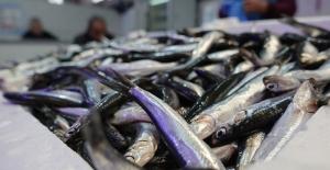 Sinop'tan 7,5 milyon dolarlık su ürünleri ihracatı