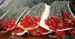 Türkiye'den 39 ülkeye çiçek ihracatı