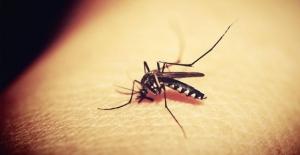 """4 kişide """"Batı Nil Virüsü"""" enfeksiyonu tespit edildi"""