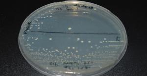 Antarktika'dan Toplanan Örneklerden Yeni Bakteri Keşfedildi