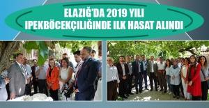 Elazığ'da 2019 Yılı İpekböcekçiliğinde İlk Hasat Alındı