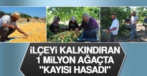 """İlçeyi Kalkındıran 1 Milyon Ağaçta """"Kayısı Hasadı"""""""