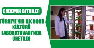 Türkiye'nin İlk Doku Kültürü Laboratuvarı'nda Üretildi