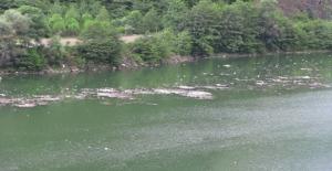 Artvin'de Baraj Gölü Hayvan Atıklarıyla Doldu
