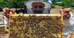 Tunceli'de bal hasadı başladı