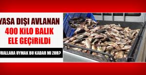Yasa Dışı Avlanan 400 Kilo Balık Ele Geçirildi