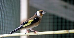 Saka Kuşu Yakalayanlara 9 Bin 800 Lira Ceza