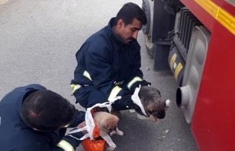 Van'da donmak üzere olan köpek yavrularını itfaiye kurtardı