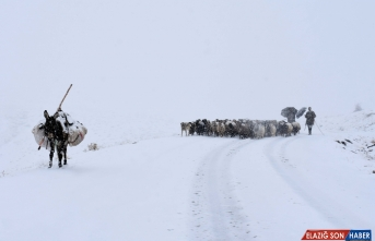 Muş'ta besiciler kar ve tipi nedeniyle zor anlar yaşadı
